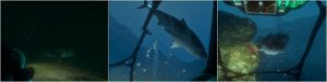 Iron Fish Crack + Torrent – PLAZA
